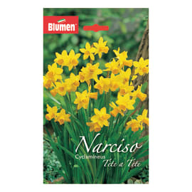 Narciso ciclamino Tête à tête