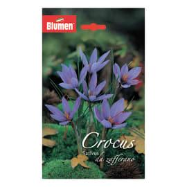 Crocus sativus Da zafferano