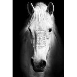 Quadro in vetro Cavallo 45x65