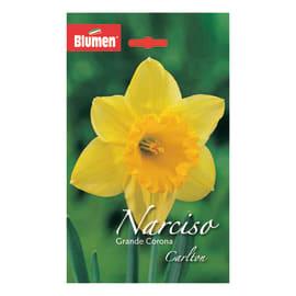 Narciso grande corona Carlton