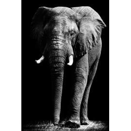 Quadro in vetro Elefante 45x65