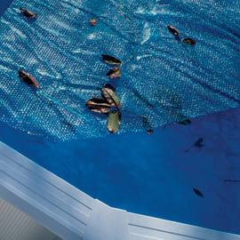 Copertura per piscina a bolle NATERIAL CV611NAT in polietilene 370 x 605 cm