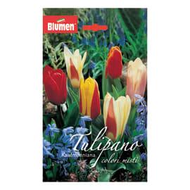 Bulbo Tulipano colori misti 36 pezzi