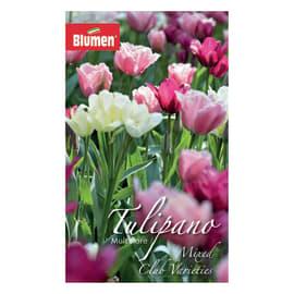 Bulbo Tulipano colori assortiti 36 pezzi