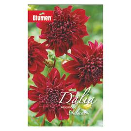 Bulbo fiore soulman rosso 6 pezzi