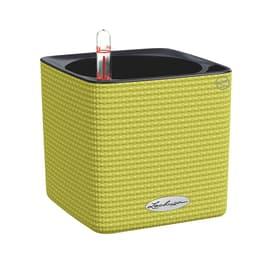 Vaso Cube Color LECHUZA in plastica verde H 14 , L 14 X P 14 cm