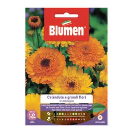 Seme fiore Calendula a grandi fiori in miscuglio nan