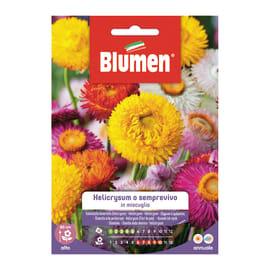 Seme fiore Helicrysum o semprevivo in miscuglio nan