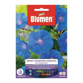 Seme fiore Ipomea o campanella rampicante blu nan