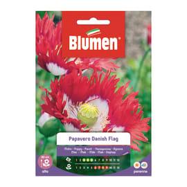 Seme fiore Papavero Danish Flag nan