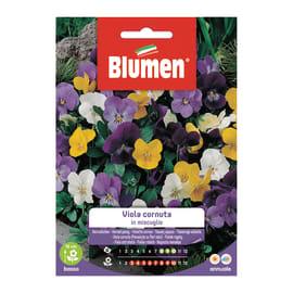 Seme fiore Viola cornuta blu nan