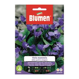 Seme fiore Viola mammola delle quattro stagioni nan