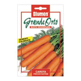 Seme per orto carota precoce nantese