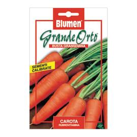 Seme per orto carota rubrovitamina