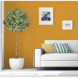 Pittura murale PANTONE MAX MEYER 2 L sunflower