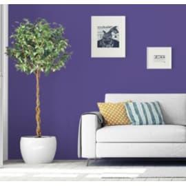 Pittura murale PANTONE PANTONE 2 L ultra violet