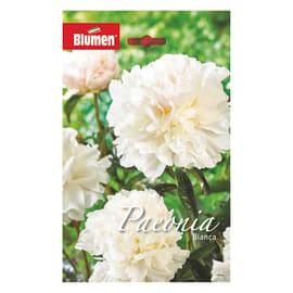 Bulbo fiore bianca bianco 6 pezzi