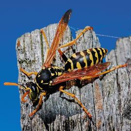 Insetticida schiuma per zanzare, vespe, calabroni