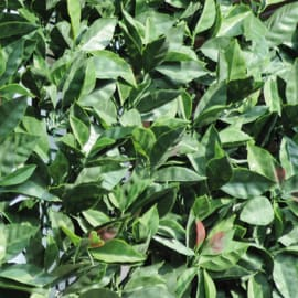 Siepe artificiale photinia L 3 x H 1 m