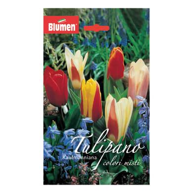 Bulbo Tulipano colori misti confezione da 36