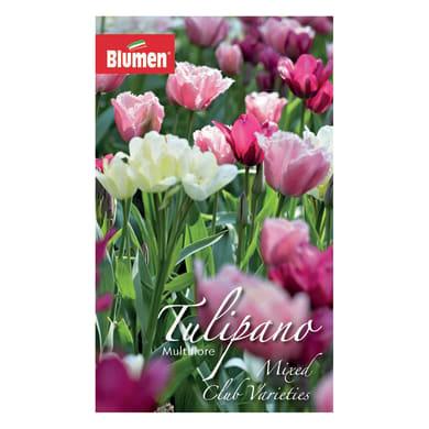 Bulbo Tulipano colori assortiti confezione da 36