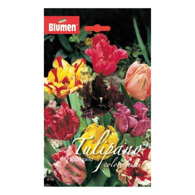 Bulbo Tulipano Pappagallo colori assortiti confezione da 36
