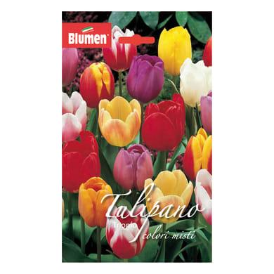 Bulbo Tulipano Trionfo colori assortiti confezione da 36