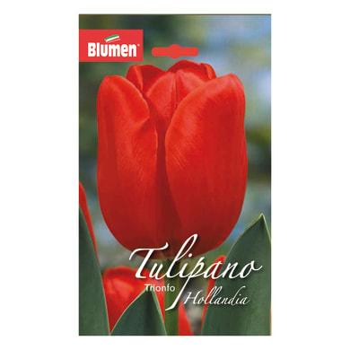 Bulbo hollandia/seadov rosso confezione da 36