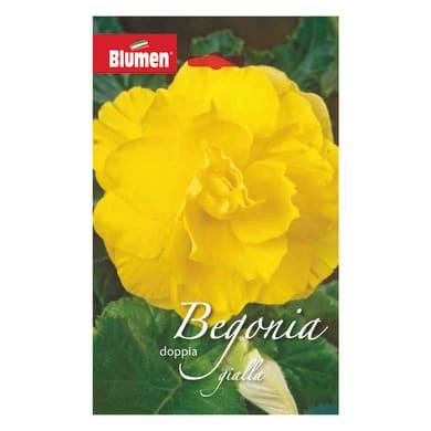 Bulbo fiore gialla giallo confezione da 12