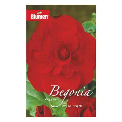Bulbo fiore BLUMEN rossa rosso confezione da 12