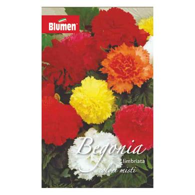 Bulbo fiore Begonia Fimbriata colori assortiti confezione da 18