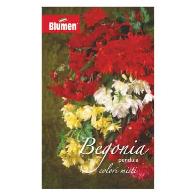 Bulbo fiore Begonia Pendula colori assortiti confezione da 18