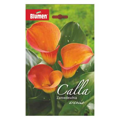 Bulbo fiore arancio arancione confezione da 6