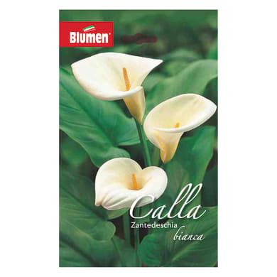 Bulbo fiore bianca bianco confezione da 6