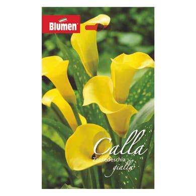 Bulbo fiore gialla giallo confezione da 6