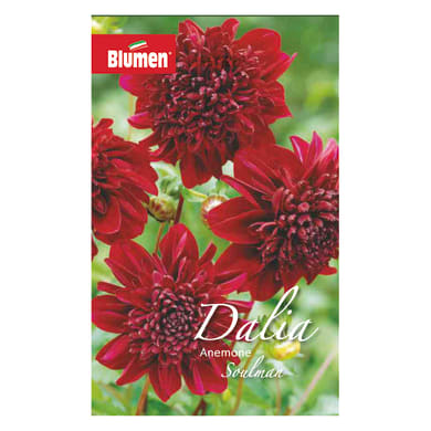 Bulbo fiore BLUMEN soulman rosso confezione da 6