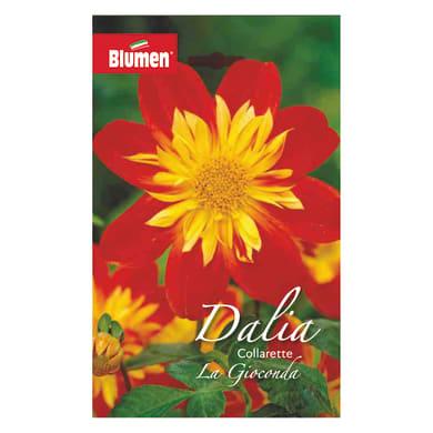 Bulbo fiore BLUMEN la gioconda giallo/rosso confezione da 6