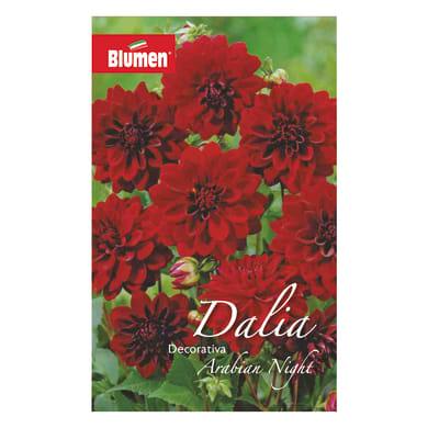 Bulbo fiore BLUMEN arabian night rosso confezione da 6