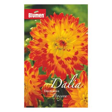 Bulbo fiore BLUMEN procyon giallo/rosso confezione da 6