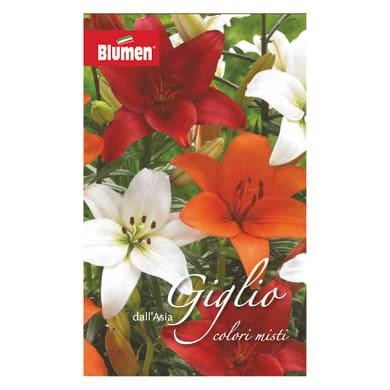 Bulbo fiore Giglio colori assortiti 12 pezzi