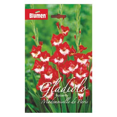 Bulbo fiore BLUMEN butterfly mlle de paris rosso confezione da 60
