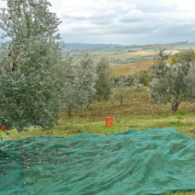 Rete per olive Antispina L 12 x H 6 m