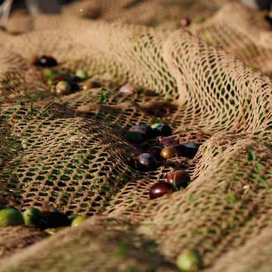 Rete per olive Nido d'ape L 50 x H 4 m