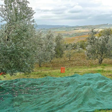 Rete per olive Antispina L 8 x H 8 m