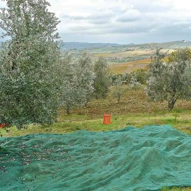 Rete per olive Antispina L 10 x H 5 m