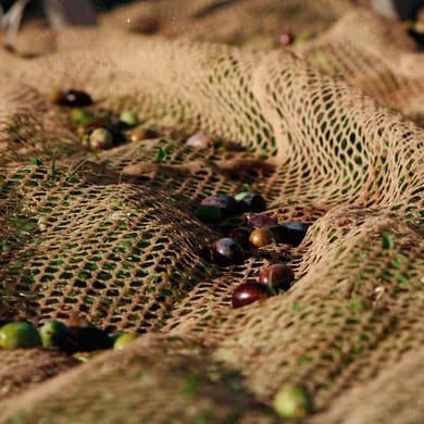 Rete per olive Nido d'ape L 8 x H 8 m