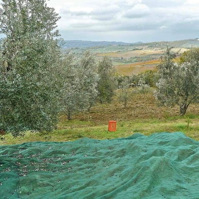 Rete per olive Antispina L 12 x H 10 m