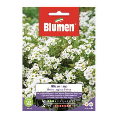 Seme fiore Alisso bianco nano nan