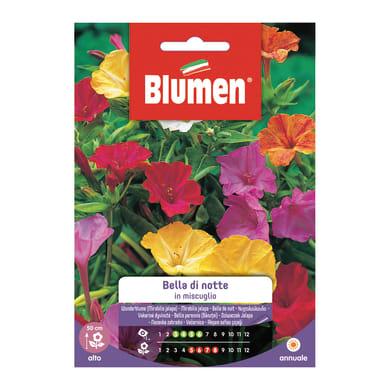 Seme fiore Balsamina nan
