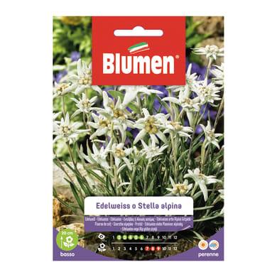 Seme fiore Edelweiss o stella alpina nan